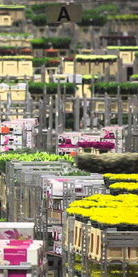 Nieuwe Rooster scenario's voor FloraHolland